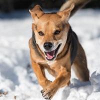雪上を走る‼