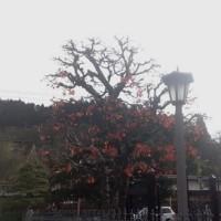 ぷらり高山 1