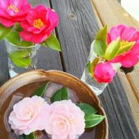 どちらが山茶花?椿?