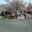 4月1日 桜市初日です。
