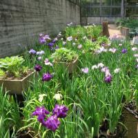 今日の水戸市植物公園