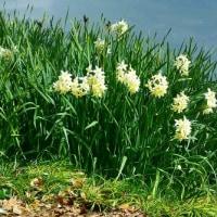 早春を過ぎた白鳥庭園