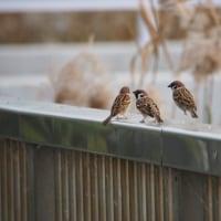 12月4日の鳥撮り散歩・・・