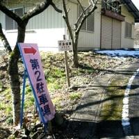 藤岡・鬼石の桜山で蝋梅見物 H-29- 1-10