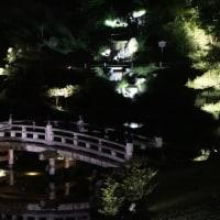 ライトアップの玉泉院丸庭園