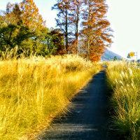 恵まれた好天!びわ湖勝手気まま歩き20周の5回目心地よく歩く!