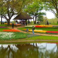 昭和記念公園スプリングマジック2017