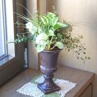 観葉植物のグラス植え