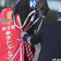 トーセンジョウオーの仔・トーセンセラヴィ が東京シンデレラマイル(SIII)優勝