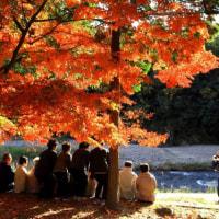 多治見市虎渓山永保寺の紅葉