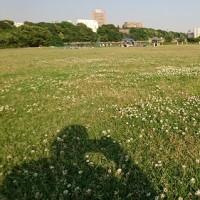 江戸川河川敷 シロツメクサ