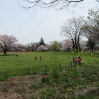 武蔵野中央公園界隈 4月10日