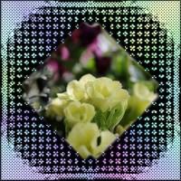 たまには違った花を・・・
