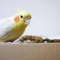 小鳥の小物と☆とんがりとおもちゃ