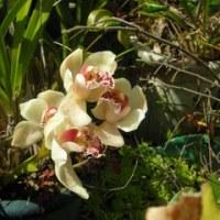 我が家の花達3月(P3)