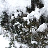大雪です(◎_◎;)
