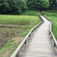 外出・新林公園・昨日のテレビ東京から「境川泥船」