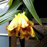 奈良で出会ったお花たち