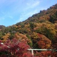 紅葉狩り!秋ですな~(*´∇`*)