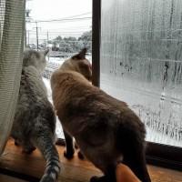 雪の上を歩く2ニャン♪
