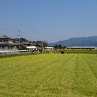 菜の花まつりへ ~福岡・古賀市~