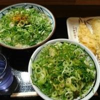 「丸亀製麺」!!「かけうどん並とご飯」!!