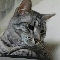酢鶏とか弁当☆犬腕枕で寝る猫。