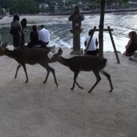 日本三景が一つ、安芸の宮島4
