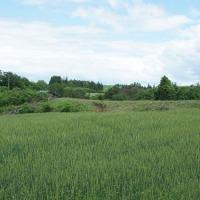 小麦畑の赤カビ防除