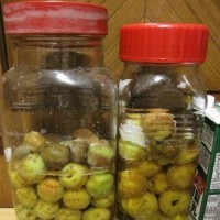 庭で採れた青梅と買って来た青梅(約2kg)で梅ジュースを作った