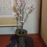 lt's bloomed cherry blossom.