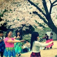山崎 桜バザーでフラダンス