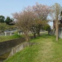 散る桜の風景