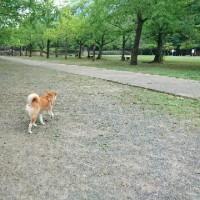 夕方散歩は忠霊搭公園