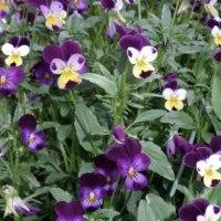 花と葉 その二