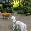 庭園散歩と息子たち