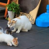 梅雨真っ最中の沖縄の猫たち 2016年5月 その34