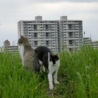 猫景色…多摩川猫シリーズ