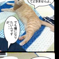 つくし(猫)と布団。(猫写真漫画)
