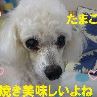 犬にたまごをあげてもいい? ( ・◇・)?(・◇・ )