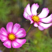 庭の花を見て出発です