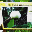 2017 妙見口~上杉尾根~初谷川~妙見口