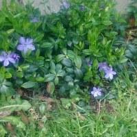 デンマークの花