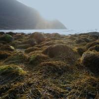 「潮とともに~海と原発とカネ」 :ウェブ連載エッセイ第2回