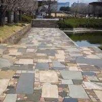 サクラが咲いた 国営昭和記念公園①:立川市・昭島市