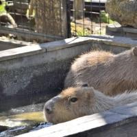 ☆風くんのファンで良かった〜三島市立公園楽寿園〜