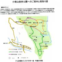 小根山森林公園での自然観察会