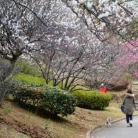 ふるさと公園の桜
