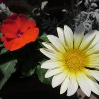 花の寄せ植え🌼