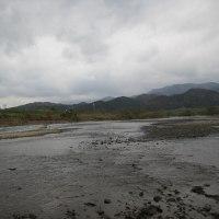 由良川の落ち鮎(3)